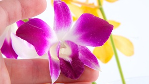 Orchideen brauchen viel Pflege. (Quelle: Thinkstock by Getty-Images)